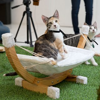 Purina ONE Cat Camp
