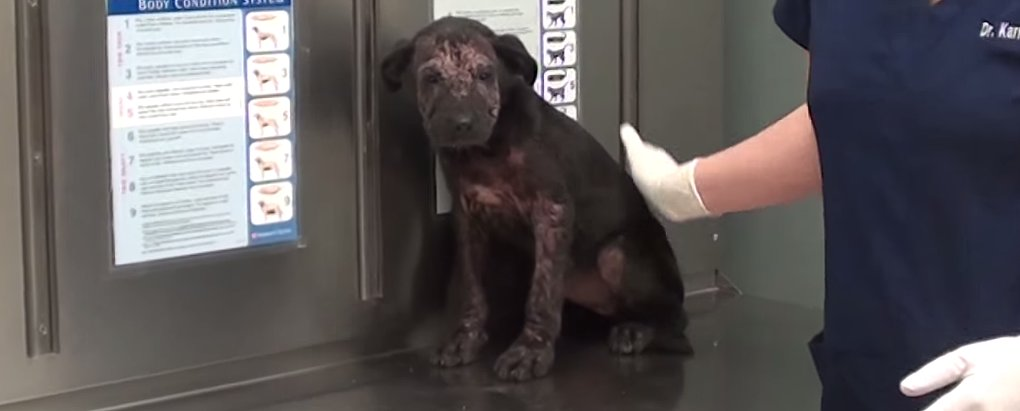 This Puppy's Rescue Story Will Restore Your Faith in Humanity