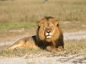 Cecil's Brother Jericho Is Alive And Well, Researcher Says