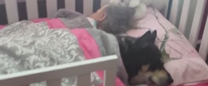 This Video of a Rescue Dog Napping With a Toddler Will Make You Want a Pet So Badly