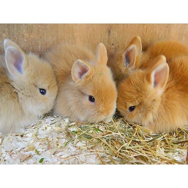 Group Of Bunnies 82