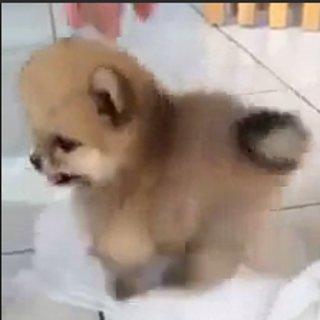 Fluffy Puppy GIF