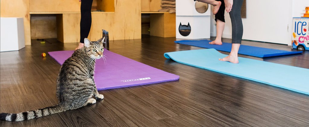 Mix Your New Year's Resolutions With Your Love of Felines in Cat Yoga