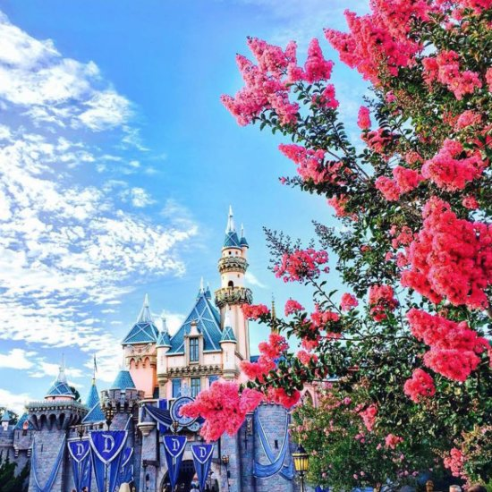 Signs You're Obsessed With Disneyland