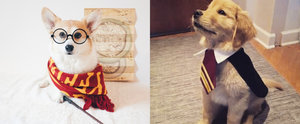 These Harry Potter Halloween Costumes For Pups Are Simply Magical