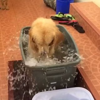 Dog Playing in Water GIF