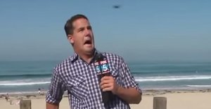 Reporter Totally Freaks Out On Live TV... Over A Big Bug