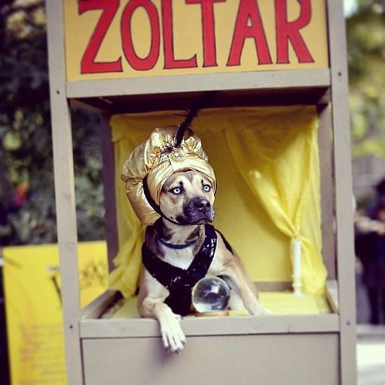 32 DIY Costumes That Will Make Everyone Jealous of Your Cute Dog