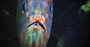 NOAA Exploration Offers Front-Row Seats To Hawaii's Bizarre Deep-Sea Ecosystems