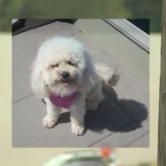 Lost Dog Finds Her Way Home