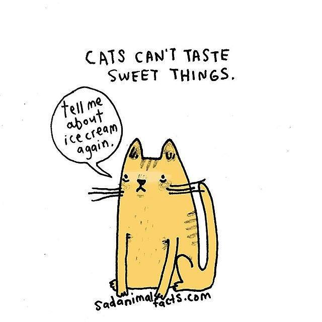 fat cat new york