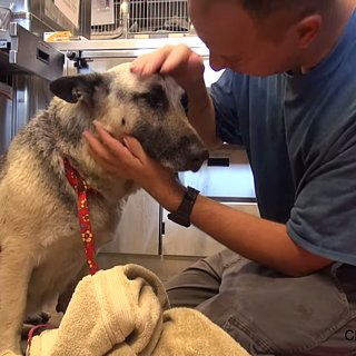 German Shepherd Rescued in Los Angeles
