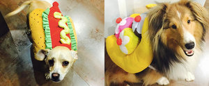 Miley Cyrus's Dogs Are Having a Better Halloween Season Than You