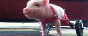 Bad Day? Let These Baby Animals Motivate You to Keep Going