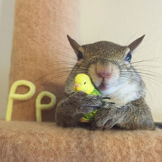 Pet Squirrel Instagram