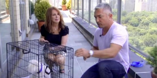 How To Crate Your Dog For Travel With Cesar Millan