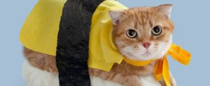 These 42 Cats in Halloween Costumes Are Silently Yelling For Help