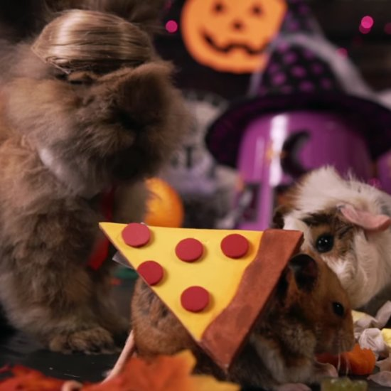 Tiny Hamster Halloween Party | Video