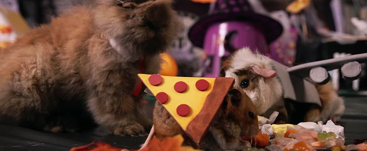 Tiny Hamster Has the Smallest Halloween Party Ever