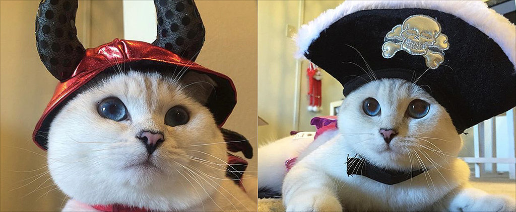 Cats Love Halloween Just as Much as Dogs Do