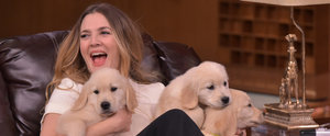 """Drew Barrymore Plays a Game of """"Pup Quiz"""" and Yes, the Results Are as Cute as They Sound"""