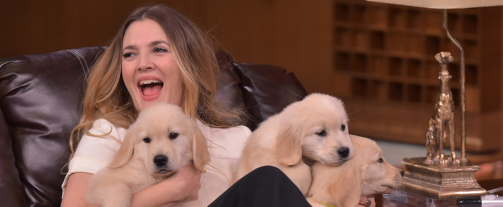 "Drew Barrymore Plays a Game of ""Pup Quiz"" and Yes, the Results Are as Cute as They Sound"