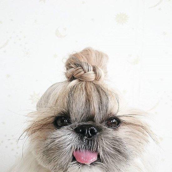 Stylish Instagram Pets