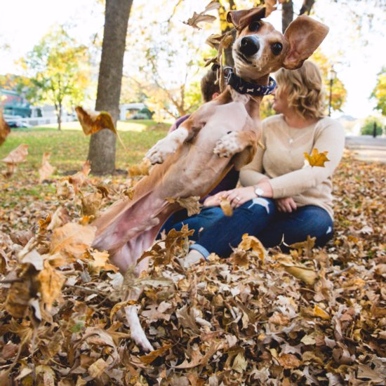This Jealous Dog Photobombed an Engagement Shoot in the BEST Way