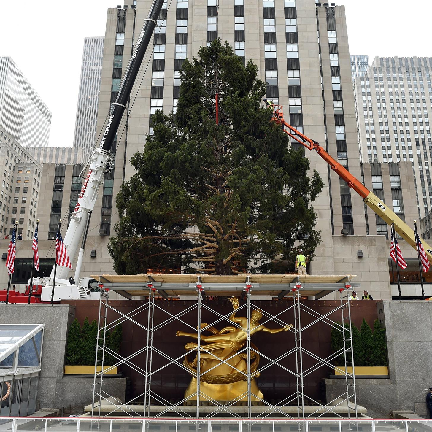 Rockefeller Christmas Tree Has Family History