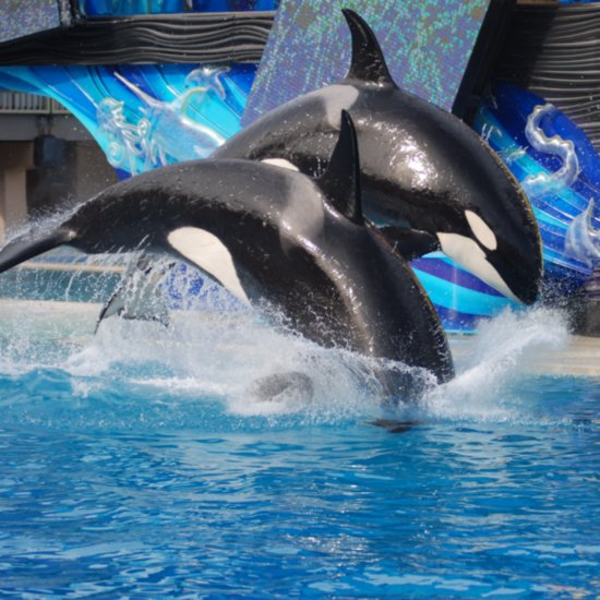 SeaWorld Getting Rid of Killer Whale Shows