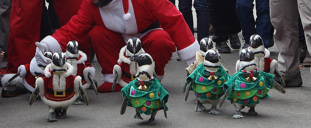You Need These Christmas Penguins in Your Life