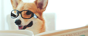 This Video of a Corgi Selling a Home Is the Cutest Thing You'll See Today