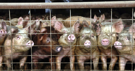 If We're Going To End Factory Farms, We Need To Eat Way Less Meat