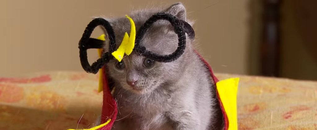 Stop Everything and Watch These Kittens Reenact Harry Potter