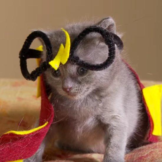 Kittens Reenact Harry Potter