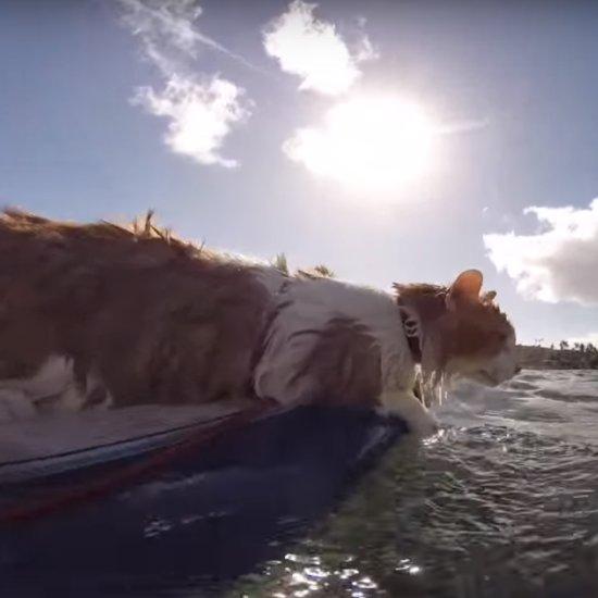 Surfing Cat Video