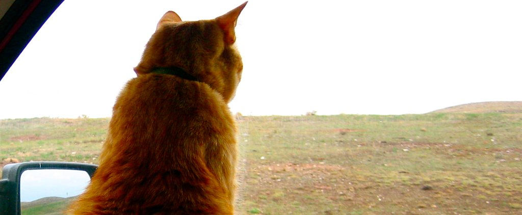 7 Helpful Tips For Taking Your Cat on a Road Trip
