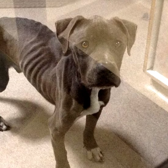 Starving Dog Rescued | Video