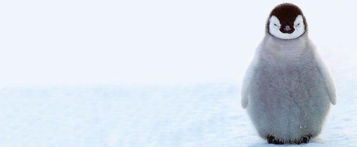 Fun Penguin Facts to Celebrate Penguin Awareness Day