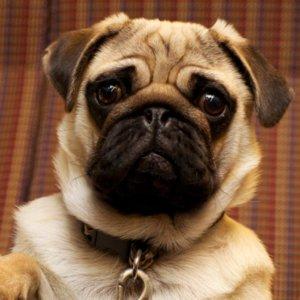 Cute Dog GIFs