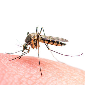 What Is the Zika Virus and Is It In Australia?