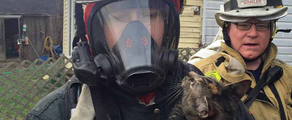 Firefighters Rescue 2 Cats From Burning Home