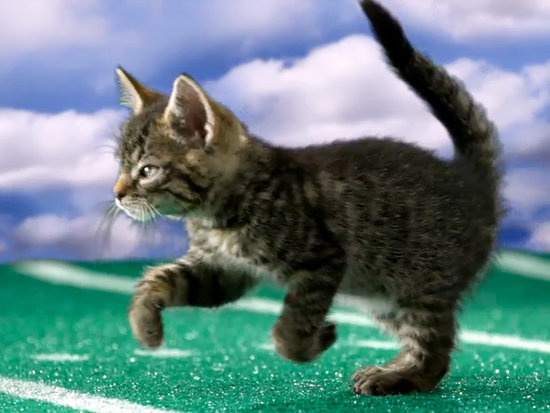 Get Ready For More Kitten Sports This Summer