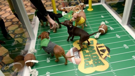 The Big Game Of Adorableness: The Ultimate Puppy Bowl XII Drinking Game
