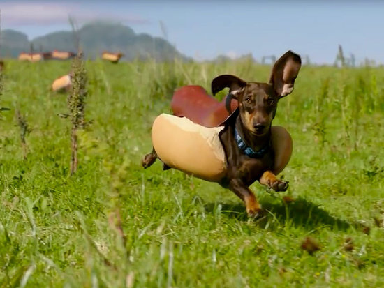 The Cutest Puppy Moments from the Heinz Super Bowl Commercial, as Told in GIFs