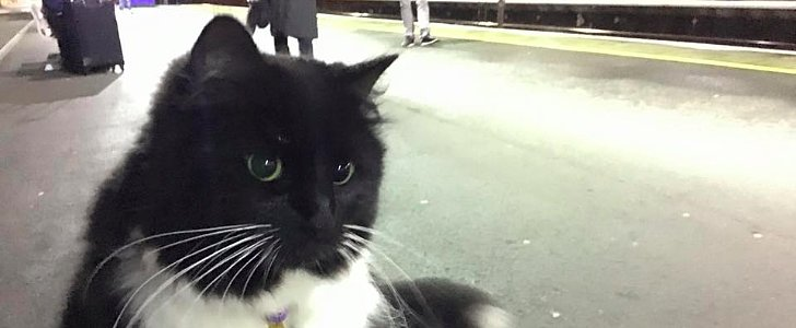 This Train Station Cat in the UK Just Got a Fancy Job Purr-motion
