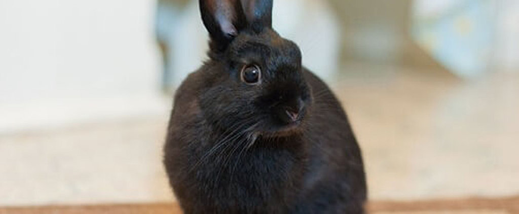 PETA Rescued This Rabbit, and Now She's Looking For Some-Bunny to Love Her Forever