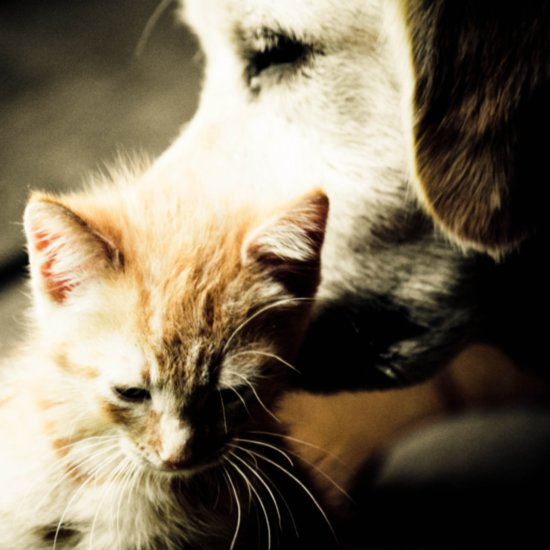 How Pets Enhance Relationships
