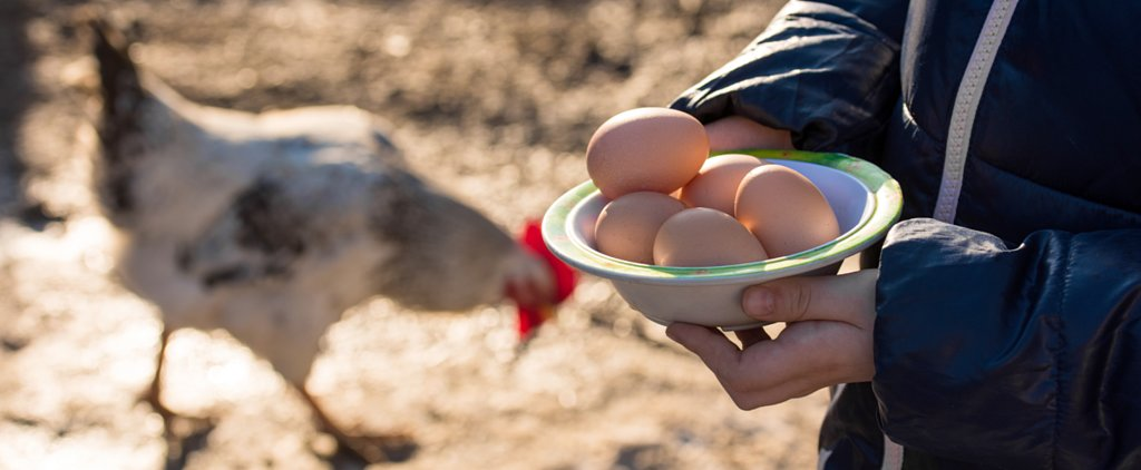 It May Be Decades Before Cage-Free Eggs Are Used in Fast Food