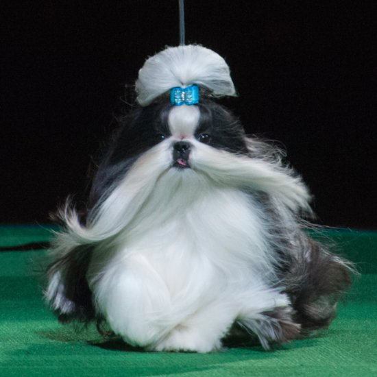 Funny Dog Names at Westminster 2016